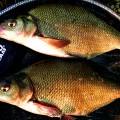 Klub sportskih ribolovaca ENERGO TIM - 4016.jpg