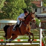 Savez za konjički sport Srbije - 954.jpg