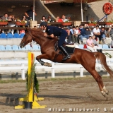Savez za konjički sport Srbije - 956.jpg